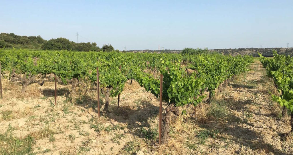 Vines, Lirac
